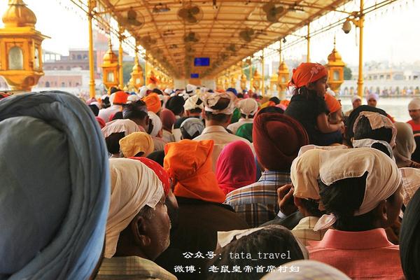 黄金堆就的阿姆利泽金庙(印度连载61) - 老鼠皇帝首席村妇 - 心底有路,大爱无疆
