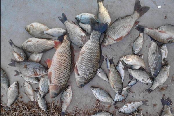 钓鱼新手如何选择适合的鱼竿